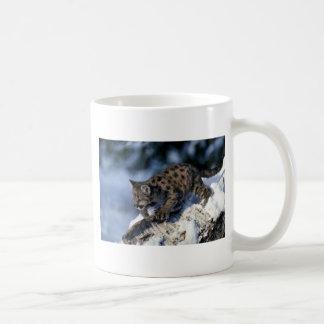 cachorro Puma-joven en un árbol nevoso Taza