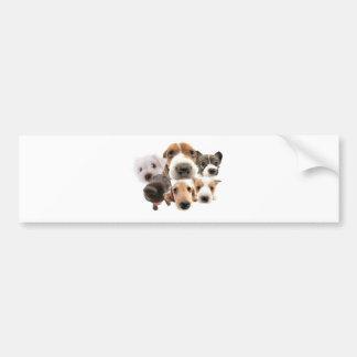 Cachorros Bumper Sticker
