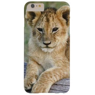 Cachorros de león en el registro, Panthera leo, Funda Barely There iPhone 6 Plus