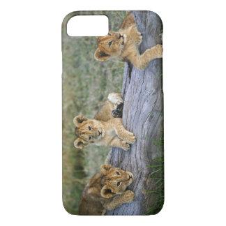 Cachorros de león en el registro, Panthera leo, Funda iPhone 7