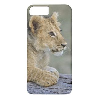 Cachorros de león en el registro, Panthera leo, Funda iPhone 7 Plus