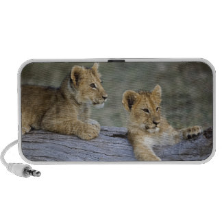 Cachorros de león en el registro, Panthera leo, Ma Altavoces De Viajar