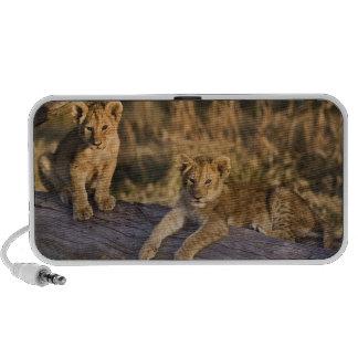 Cachorros de león en el registro, Panthera leo, Ma Altavoz De Viajar