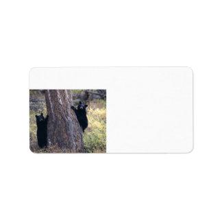 cachorros de oso negro etiqueta de dirección