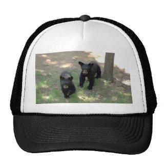 Cachorros de oso negro gorro