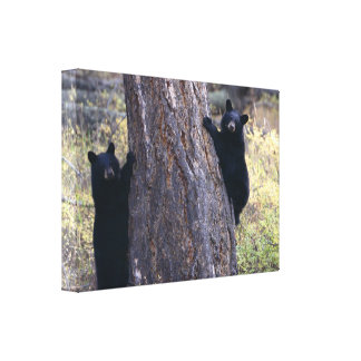 cachorros de oso negro lona estirada galerias