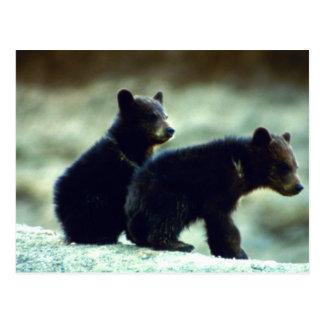 Cachorros de oso negro tarjetas postales