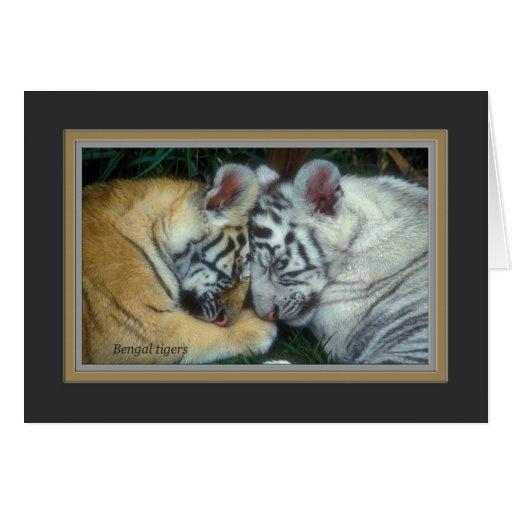 Cachorros de tigre tarjetón