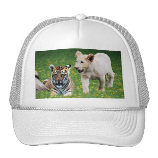 Cachorros del león y de tigre en el juego gorro