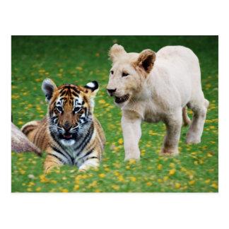 Cachorros del león y de tigre en el juego tarjetas postales