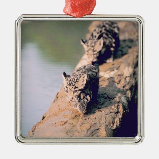 Cachorros del leopardo en registro adorno navideño cuadrado de metal