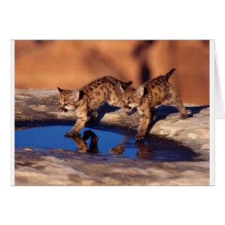 cachorros gemelos del puma tarjeton