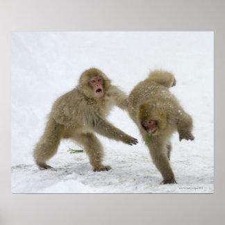 Cachorros japoneses del mono de la nieve que juega poster