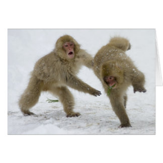 Cachorros japoneses del mono de la nieve que juega tarjetas