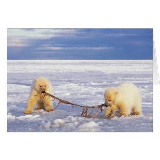 Cachorros y carne del oso polar en el hielo de paq tarjeta de felicitación