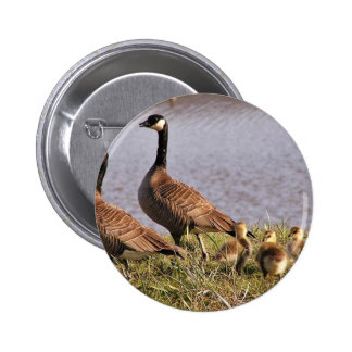 Cackling Canada goose brood Button