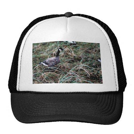 Cackling Canada goose Mesh Hat