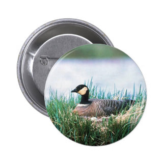 Cackling Canada goose on nest Pinback Buttons