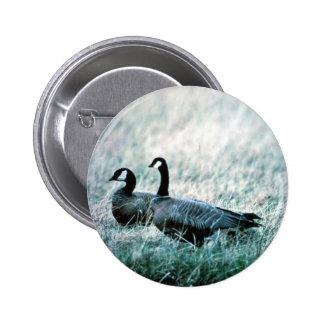Cackling Canada goose pair Button