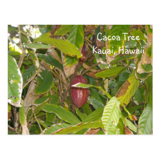 Cacoa Tree Postcard
