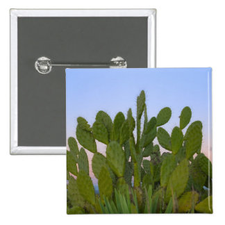 Cacti and sisal in Dry Forest 2 Inch Square Button