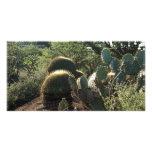 Cacti at Botanical Garden San Miguel de Allende Me Photo Card Template