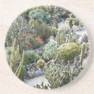 cacti drink coaster