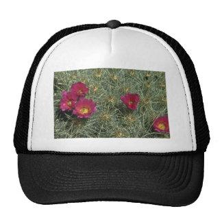 Cacti Colors Trucker Hat