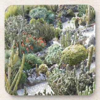 cacti beverage coasters