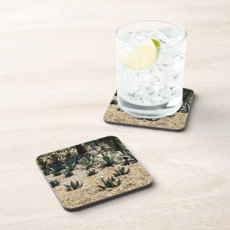 Cacti Field Drink Coasters