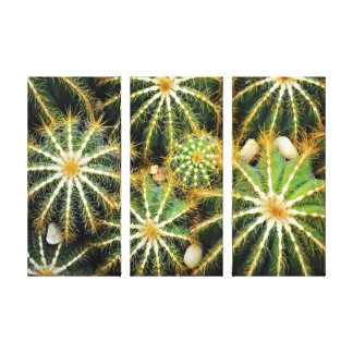 Cacti Gallery Wrapped Canvas