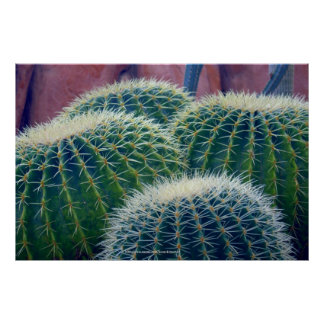 Cacti Grouping Poster