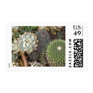 cacti postage