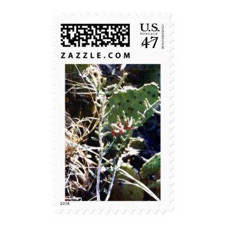 Cacti Postage Stamp