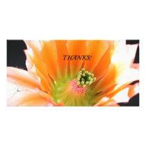 Cactus50 Card