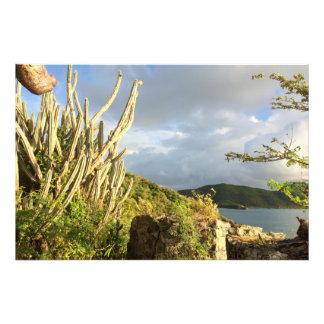 """Cactus 12"""" de la buena mañana x 8"""" foto fotografías"""