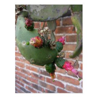 Cactus 1 de la pared tarjetas postales