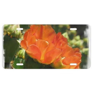 cactus-1.jpg placa de matrícula