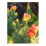 Cactus 2 de Tejas Tarjetas Postales