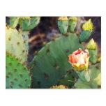 Cactus 3 de Tejas Tarjeta Postal