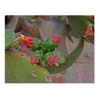 Cactus 5 de la pared postales