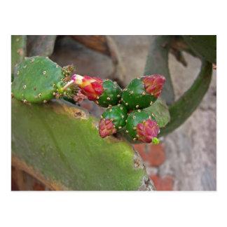 Cactus 6 de la pared tarjeta postal