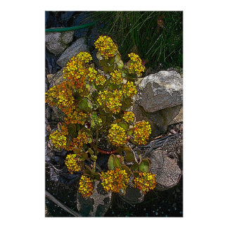 Cactus amarillo del batik póster