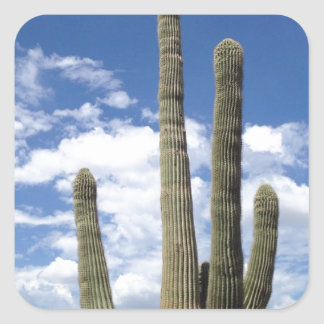 Cactus and Clouds Square Sticker