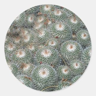 Cactus at Desert Botanical Gardens, Phoenix-Scotts Classic Round Sticker