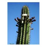 Cactus, Batopilas, barranco de cobre, México Postal