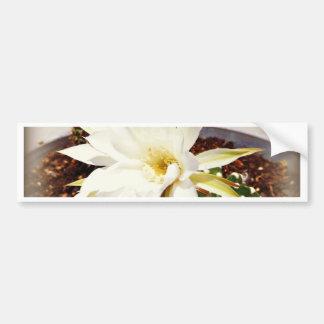 Cactus Bloom Bumper Sticker