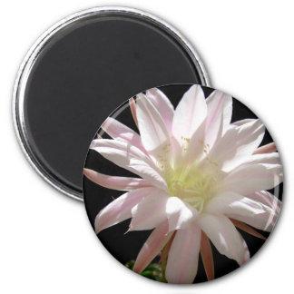 Cactus bloom magnet