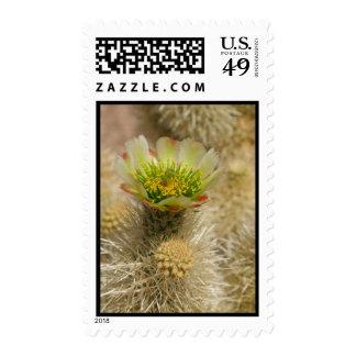 Cactus Bloom Postage