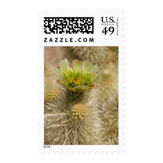 Cactus Bloom Postage Stamps